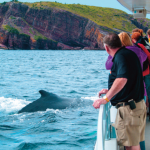 Four Ways to Watch Whales in Newfoundland and Labrador